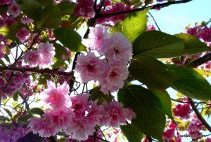 Birchfields_Park_20160514 (11)