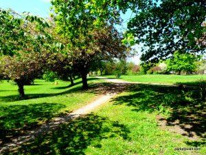 Birchfields_Park_20160514 (16)