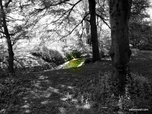 Birchfields_Park_20160514 (28)