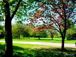 Birchfields_Park_20160514 (3)