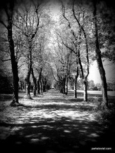Birchfields_Park_20160514 (31)