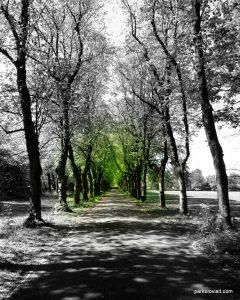 Birchfields_Park_20160514 (32)