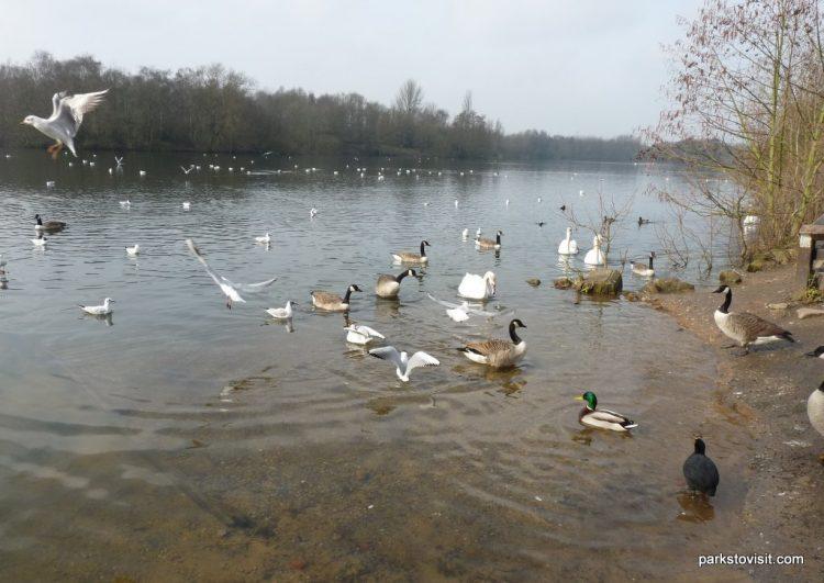 Chorlton Water Park, Manchester