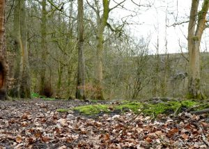 Daisy_Nook_country_park_20160319 (12)