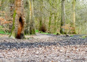 Daisy_Nook_country_park_20160319 (13)