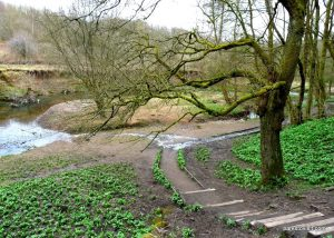 Daisy_Nook_country_park_20160319 (15)