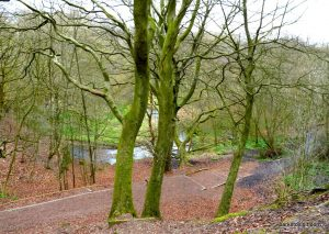 Daisy_Nook_country_park_20160319 (3)