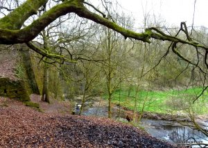 Daisy_Nook_country_park_20160319 (5)