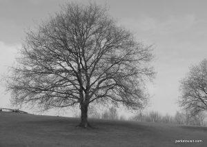 Heaton_park_20160313 (15)