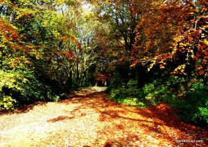 Stamford_park_Ashton_under_Lyne_20151102 (13)