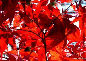 Stamford_park_Ashton_under_Lyne_20151102 (18)