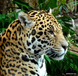 Chester Zoo_042018 (1)