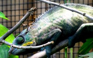 Chester Zoo_042018 (15)