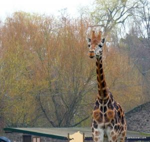 Chester Zoo_042018 (16)