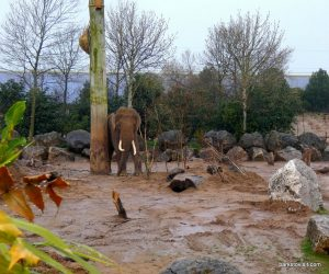 Chester Zoo_042018 (2)