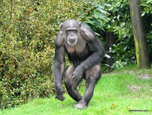 Chester Zoo_042018 (26)