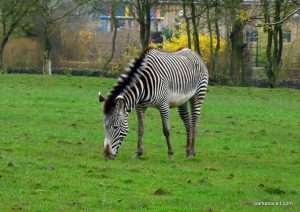 Chester Zoo_042018 (37)