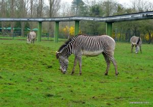 Chester Zoo_042018 (39)