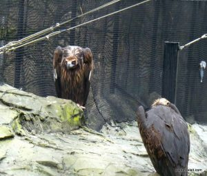 Chester Zoo_042018 (4)