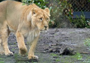 Chester Zoo_042018 (46)