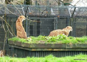 Chester Zoo_042018 (48)