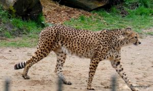 Chester Zoo_042018 (50)