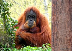 Chester Zoo_042018 (52)