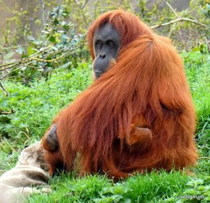 Chester Zoo_042018 (53)