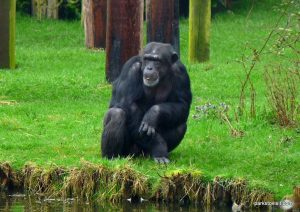 Chester Zoo_042018 (70)