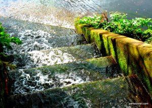 Drinkwater_park_Bury_20161022 (31)