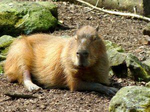 Dudley Zoo_062018 (102)
