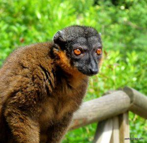 Dudley Zoo_062018 (105)