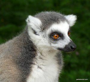 Dudley Zoo_062018 (107)
