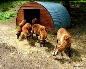 Dudley Zoo_062018 (108)