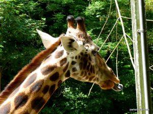 Dudley Zoo_062018 (110)