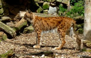 Dudley Zoo_062018 (111)