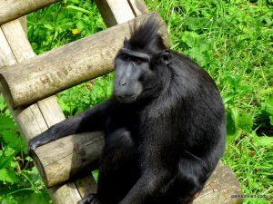 Dudley Zoo_062018 (112)