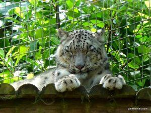 Dudley Zoo_062018 (113)