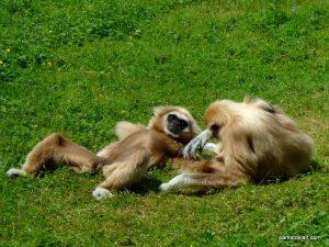 Dudley Zoo_062018 (115)