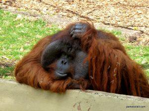 Dudley Zoo_062018 (116)