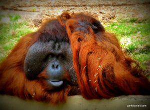 Dudley Zoo_062018 (117)