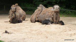 Dudley Zoo_062018 (122)