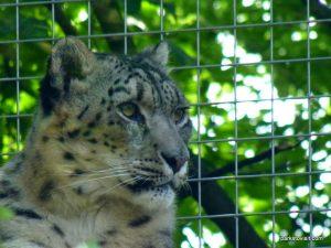 Dudley Zoo_062018 (125)