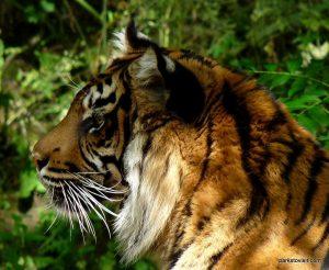 Dudley Zoo_062018 (126)