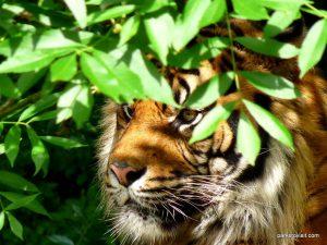 Dudley Zoo_062018 (127)