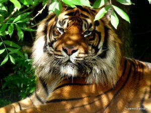 Dudley Zoo_062018 (129)
