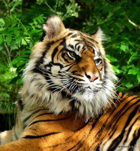 Dudley Zoo_062018 (130)