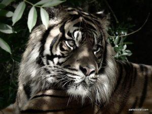 Dudley Zoo_062018 (131)