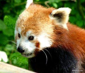 Dudley Zoo_062018 (132)