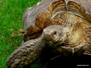 Dudley Zoo_062018 (133)